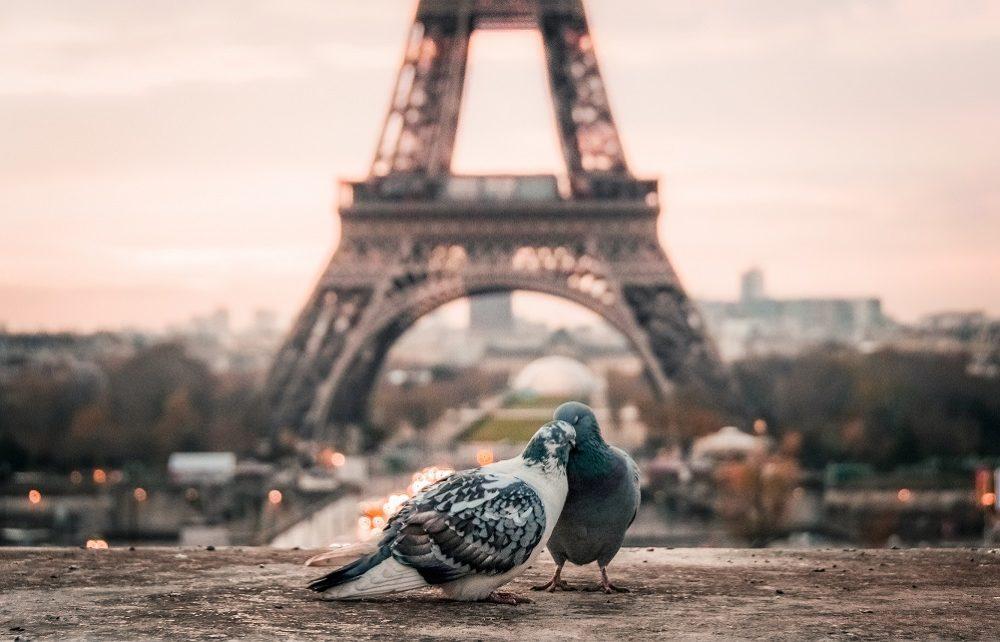 marriage of birds